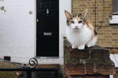 Crouching Rural Cat Stock Photo