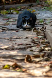 A crouching stray cat Stock Photos