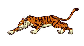 Crouching tiger. Vector Illustration of crouching tiger Stock Image