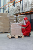 Crouching worker wrapping box on pallet