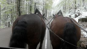 Croup Two Brown Horses During Walk. stock video footage