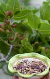 ?crous doux, sensibles, parfum?s, pistaches de Bronte avec la couleur verte brillante et chocolat fait main de pistache images libres de droits