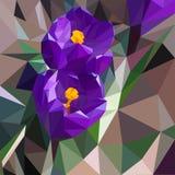 Crouse della primavera nel giardino illustrazione di stock