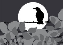 Crow. Abstract style crow illustration vector Royalty Free Stock Photography