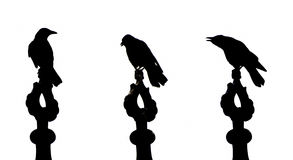 Crow. Silhouettes showing different phases of Stock Images