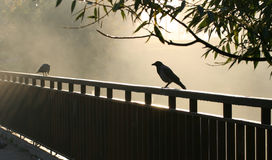Crow. Seating on the iron rail and morning sunbeams around it Royalty Free Stock Photos