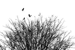 The crow with autumn tree, black and white Royalty Free Stock Image