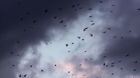 Crow Birds In The Dramatic Sunset Sky stock video footage