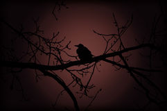 Crow on branch at night Royalty Free Stock Images