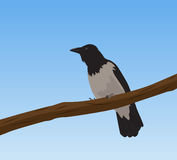 Crow on branch Royalty Free Stock Photos