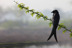 Crow on branch of tree Stock Image