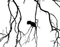 Crow on branch of tree Royalty Free Stock Images