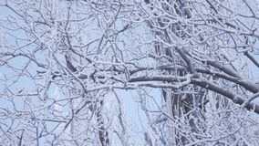 Crow on branch winter. On snow covered branch sits crow flies stock footage