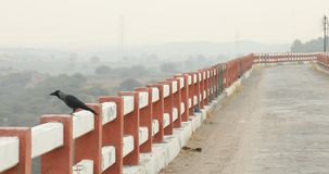 Crow on the bridge India stock footage