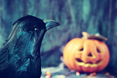 Crow and carved pumpkin Royalty Free Stock Photos