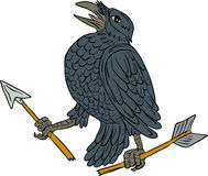 Crow Clutching Broken Arrow Drawing. Drawing sketch style illustration of a crow looking up clutching a broken arrow viewed from the side set on isolated white Royalty Free Stock Images