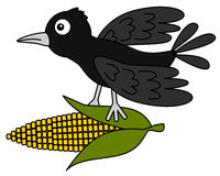 Crow with corn. Illustration of a crow flying away with a corn Stock Photos