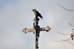 Crow on a Cross Royalty Free Stock Photos