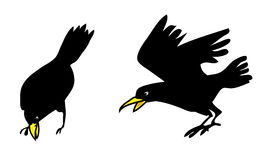 Crow, crows bird illustration Royalty Free Stock Photography