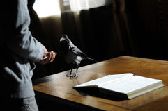 Crow on the desk Royalty Free Stock Images