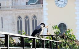 Crow in front of cathedral Stock Photo
