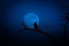 Crow at full moon Stock Photos