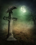 Crow on a grave. At night stock photography