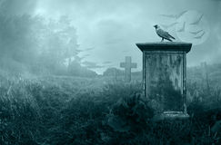 Crow on a gravestone. Crow sitting on a gravestone in moonlight Stock Image