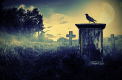 Crow on a gravestone. Crow sitting on a gravestone in moonlight Stock Photos