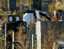 Crow on a gravestone Stock Photo