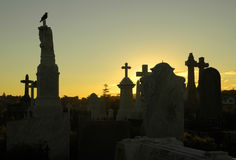 Crow at graveyard. Dusk at cemetery, crow sitting on tombstone, several grave silhouettes Stock Photography