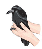 The Crow and the hands. Royalty Free Stock Photography