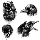 Crow head drawing line work vector Stock Images
