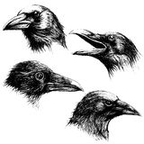 Crow head drawing line work vector Stock Photography