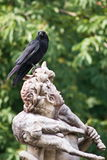 Crow on the head of a statue Stock Image