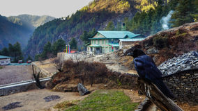 Crow in Himalayas Royalty Free Stock Photo