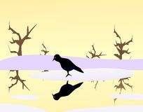 Crow on Ice Stock Photo