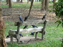 Crow of landscape dhaka city. royalty free stock photos