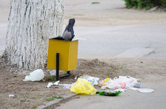 Crow is looking for food in a garbage urn Stock Image