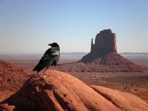 Crow in Monument Valley. Crow on a rock in Monument Valley, Arizona royalty free stock photo