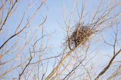 Crow Nest in a Tree Royalty Free Stock Images