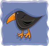 Crow with orange beak Royalty Free Stock Photos