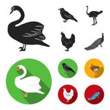 Crow, ostrich, chicken, peacock. Birds set collection icons in black, flat style vector symbol stock illustration web. Crow, ostrich, chicken, peacock. Birds Royalty Free Stock Images