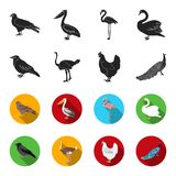 Crow, ostrich, chicken, peacock. Birds set collection icons in black,flet style vector symbol stock illustration web. Crow, ostrich, chicken, peacock. Birds set Stock Photography