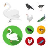 Crow, ostrich, chicken, peacock. Birds set collection icons in cartoon,flat style vector symbol stock illustration web. Crow, ostrich, chicken, peacock. Birds Royalty Free Stock Photography