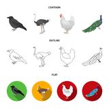 Crow, ostrich, chicken, peacock. Birds set collection icons in cartoon,outline,flat style vector symbol stock. Illustration Royalty Free Stock Photos
