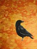 Crow stock photography