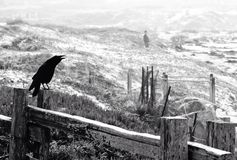 A crow perched on a wooden fence Royalty Free Stock Photos