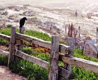 A crow perched on a wooden fence Royalty Free Stock Images