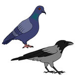 Crow and pigeon illustration Stock Image